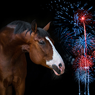 Blue Cross survey reveals concerns about impact of fireworks on horses
