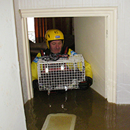Animal owners urged to prepare for flooding