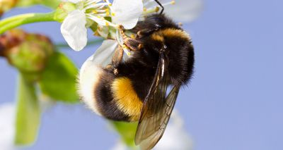 Petition launched to reverse decision on bee-harming pesticide