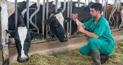 Report highlights need for farm animal health and welfare body