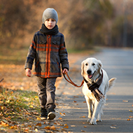 Young Kennel Club launches challenge for young dog owners