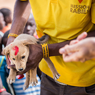 New app helps vets double rabies vaccination rates