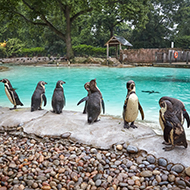 London Zoo undertakes annual stocktake
