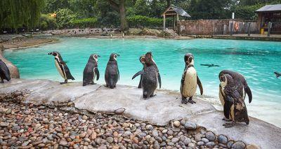 London Zoo undertakes annual stocktake