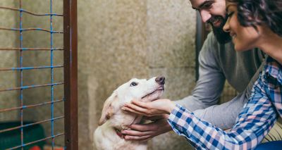 New pet adoption website brings together animal rescue centres across UK