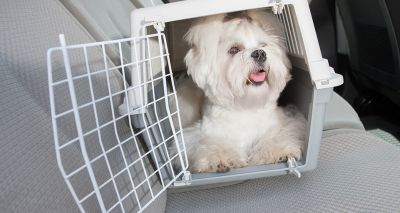 Northern Ireland raises concerns over pet travel regulations