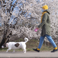 Government updates guidance on dog walking in lockdown