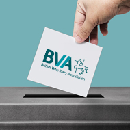 Voting now open for BVA regional representatives