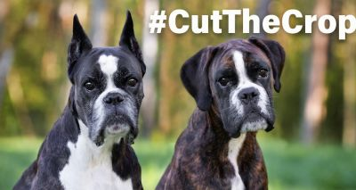 Vets and animal charities back ear cropping petition