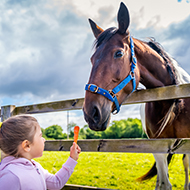 Public urged to stop feeding horses without permission