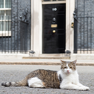 Larry the Downing Street cat celebrates ten years at Number 10