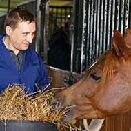 BEVA to hold online equine nutrition course