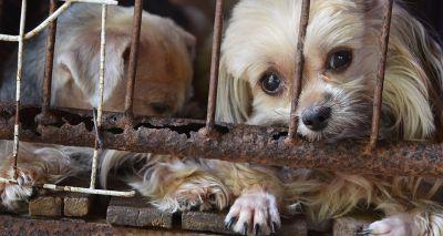 Anti-puppy farm legislation made law in Scotland