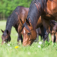 Webinar to focus on equine worm control