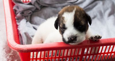 Scottish SPCA launches appeal as centres hit capacity