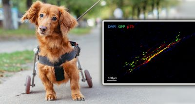 Researchers develop new treatment to improve recovery after spinal cord injury