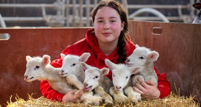 Hartpury welcomes birth of 'one-in-a-million' quintuplet lambs