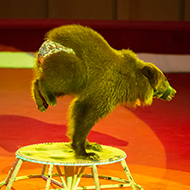 Charities call for Europe-wide ban on wild animals in circuses