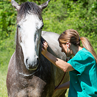 Vets sought for equine grass sickness project