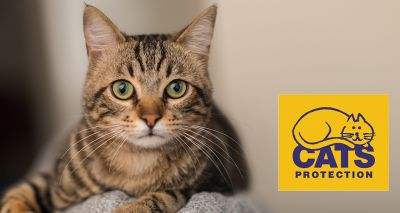 Cats Protection shares benefits of 'shelter medicine'