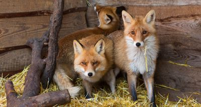 Scottish SPCA appeals for building materials for National Wildlife Rescue Centre