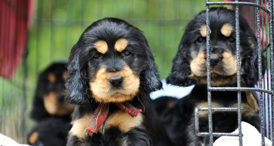 Dogs Trust marks 1,500 smuggled puppies rescued through Puppy Pilot Scheme
