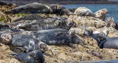 Government-backed campaign urges public to 'give seals space'