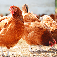 Scientists seek avian flu tests to assess emerging strains