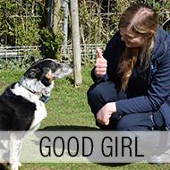 Deaf sheepdog returns to work after learning 'sign language'