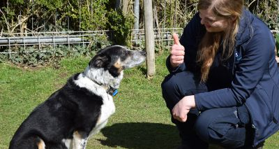 Deaf sheepdog returns to work after learning 'sign language'
