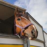 Changes to British horse exports following new EU law