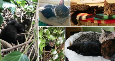 Cats Protection rescues a cat and her kittens found nesting in a tree