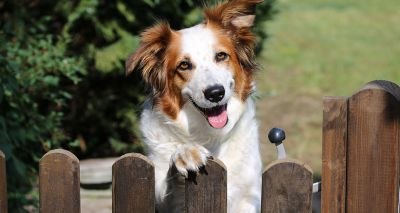 Government taskforce to tackle surge in pet theft