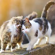 Cat behaviour conference details announced