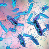 Salmonella study reveals how genetic changes alter disease risk