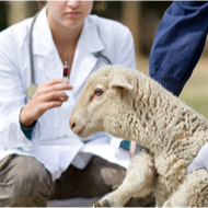 Veterinary disease centre receives funding boost