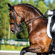 British Equestrian lifts EHV-1 quarantine restrictions