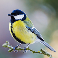 Bird genes reveal impact of city living