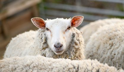 Animals formally recognised as sentient beings in UK law