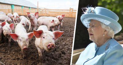 Vets welcome new animal welfare pledges