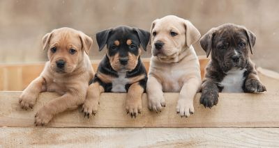 Government launches second Animal Welfare Bill