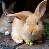 Rabbit Awareness Week packs now available