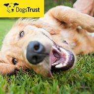 Views sought on dog behaviour