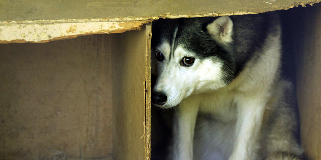 Animal offenders to face fines of up to &pound5,000