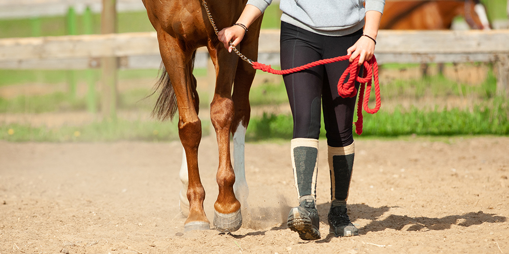 Scholarship programme for Equine Research launched