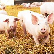 Survey reveals attitudes towards farm animal health and welfare