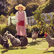 British and French hen welfare affiliation announced