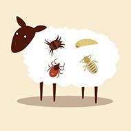 Moredun animation explains ectoparasites of sheep