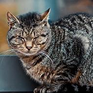 Feline pancytopenia update
