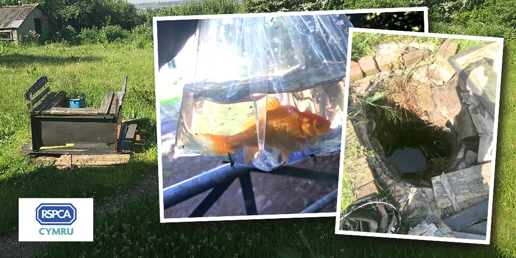 Goldfish rescued from 7ft deep well